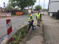 2021-05-15-stauden_pflanzen_verkehrsinseln_nsvkoslar-14
