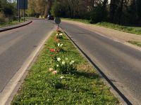 tulpenbluete-2020-04-10-13