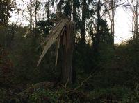 003-waldlehrpfad-02-11-2014